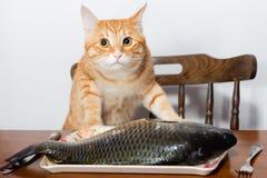Πορτοκαλιά γάτα και ένα μεγάλο ψάρι Στοκ Εικόνες