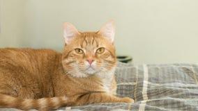 Πορτοκαλιά γάτα στο κρεβάτι στοκ εικόνα