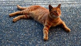 Πορτοκαλιά γάτα Στοκ Εικόνες