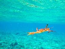 Πορτοκαλιά επίθεση καβουριών σε έναν όμορφο τυρκουάζ ωκεανό στους υποβρύχιους κοντινούς Ile κοκοφοίνικες των Σεϋχελλών στοκ εικόνες με δικαίωμα ελεύθερης χρήσης