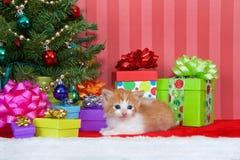 Πορτοκαλιά και άσπρα τιγρέ Χριστούγεννα γατακιών Στοκ φωτογραφία με δικαίωμα ελεύθερης χρήσης