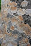 Πορτοκαλιά και γκρίζα λειχήνα σε έναν βράχο Στοκ εικόνα με δικαίωμα ελεύθερης χρήσης