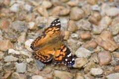 Χρωματισμένος την κυρία Butterfly Στοκ φωτογραφία με δικαίωμα ελεύθερης χρήσης