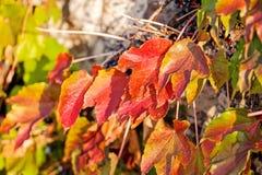 Πορτοκαλιά και πράσινα φύλλα Στοκ Εικόνα