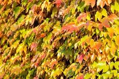 Πορτοκαλιά και πράσινα φύλλα Στοκ εικόνα με δικαίωμα ελεύθερης χρήσης