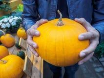 Πορτοκαλιά κολοκύθα στα χέρια Μεγάλη κολοκύθα στα χέρια ατόμων Κίτρινα χέρια εκμετάλλευσης κολοκύθας Όμορφη μεγάλη κολοκύθα Στοκ εικόνες με δικαίωμα ελεύθερης χρήσης