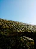 Πορτοκαλιά μόνωση δέντρων Στοκ Εικόνες