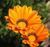 Πορτοκαλιά ομορφιά Στοκ εικόνα με δικαίωμα ελεύθερης χρήσης