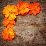 Πορτοκαλιά λουλούδια στο ξύλο Στοκ φωτογραφίες με δικαίωμα ελεύθερης χρήσης