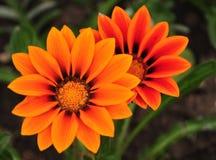 Πορτοκαλιά λουλούδια στο πάρκο Στοκ φωτογραφία με δικαίωμα ελεύθερης χρήσης