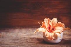 Πορτοκαλιά λουλούδια Lilia στοκ φωτογραφία με δικαίωμα ελεύθερης χρήσης