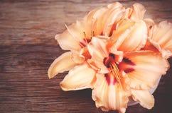 Πορτοκαλιά λουλούδια Lilia στοκ εικόνα με δικαίωμα ελεύθερης χρήσης