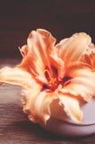 Πορτοκαλιά λουλούδια Lilia στοκ εικόνες με δικαίωμα ελεύθερης χρήσης