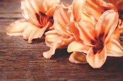 Πορτοκαλιά λουλούδια Lilia στοκ φωτογραφία