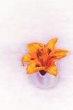 Πορτοκαλιά λουλούδια Lilia στοκ εικόνα