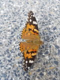 Πορτοκαλιά πεταλούδα που χτυπά τα φτερά στοκ εικόνα με δικαίωμα ελεύθερης χρήσης