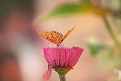 Πορτοκαλιά πεταλούδα σε ένα λουλούδι Στοκ Εικόνες
