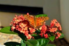 Πορτοκαλιά πεταλούδα στον κήπο Στοκ Φωτογραφίες