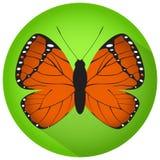 Πορτοκαλιά πεταλούδα στον πράσινο κύκλο Στοκ Φωτογραφίες