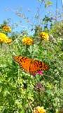 Πορτοκαλιά πεταλούδα Στοκ εικόνες με δικαίωμα ελεύθερης χρήσης