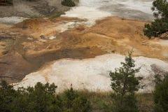 Πορτοκαλιά ρεύματα των γεωθερμικών καταθέσεων, στα δέντρα πεύκων, Yellowst Στοκ φωτογραφίες με δικαίωμα ελεύθερης χρήσης