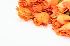 πορτοκαλιά τριαντάφυλλ&alph Στοκ Εικόνες