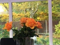πορτοκαλιά τριαντάφυλλ&alph Στοκ φωτογραφία με δικαίωμα ελεύθερης χρήσης
