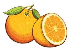 Πορτοκαλιά φρούτα. Διάνυσμα Στοκ φωτογραφία με δικαίωμα ελεύθερης χρήσης