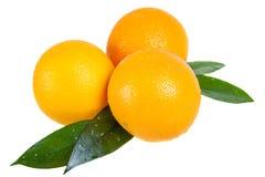 Πορτοκαλιά φρούτα με τα φύλλα Στοκ φωτογραφία με δικαίωμα ελεύθερης χρήσης