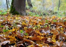 Πορτοκαλιά φύλλα στο έδαφος Στοκ Φωτογραφία