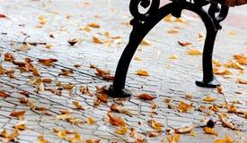 Πορτοκαλιά φύλλα φθινοπώρου μαύρη καφετιά έννοια χρώματος ανασκόπησης λίγη πράσινη εποχή σφενδάμνου φύλλων Στοκ Φωτογραφίες