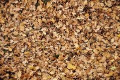 Πορτοκαλιά φύλλα φθινοπώρου ομάδας υποβάθρου Στοκ φωτογραφία με δικαίωμα ελεύθερης χρήσης