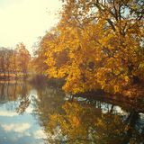 Πορτοκαλιά φύλλα φθινοπώρου στοκ φωτογραφίες με δικαίωμα ελεύθερης χρήσης