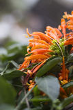 Πορτοκαλιά όμορφα λουλούδια με τις σταγόνες βροχής μια βροχερή ημέρα στοκ εικόνα