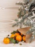 Πορτοκαλιά tangerines κοντά στα χειμερινά δέντρα απομονωμένη Χριστούγεννα διάθεση τρία σφαιρών λευκό Στοκ Εικόνα