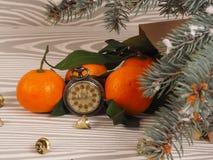 Πορτοκαλιά tangerines κοντά στα χειμερινά δέντρα απομονωμένη Χριστούγεννα διάθεση τρία σφαιρών λευκό Στοκ Φωτογραφία