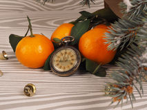 Πορτοκαλιά tangerines κοντά στα χειμερινά δέντρα απομονωμένη Χριστούγεννα διάθεση τρία σφαιρών λευκό Στοκ Εικόνες