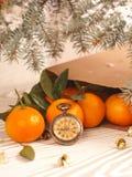 Πορτοκαλιά tangerines κοντά στα χειμερινά δέντρα απομονωμένη Χριστούγεννα διάθεση τρία σφαιρών λευκό Στοκ Φωτογραφίες