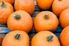 Πορτοκαλιές κολοκύθες αποκριών Στοκ φωτογραφίες με δικαίωμα ελεύθερης χρήσης