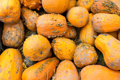 Πορτοκαλιές κολοκύθες αποκριών Στοκ Φωτογραφίες