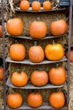 Πορτοκαλιές κολοκύθες αποκριών στοκ εικόνες