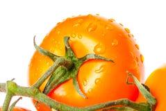 Πορτοκαλιές ντομάτες σε ένα άσπρο υπόβαθρο Στοκ εικόνες με δικαίωμα ελεύθερης χρήσης