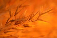 Πορτοκαλιές σκιές στο πορτοκαλί υπόβαθρο Στοκ Εικόνες