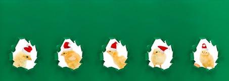 Πορτρέτα κοτόπουλου Χριστουγέννων Στοκ φωτογραφία με δικαίωμα ελεύθερης χρήσης