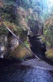 πορτρέτα του Όρεγκον στοκ φωτογραφία με δικαίωμα ελεύθερης χρήσης