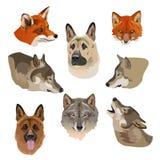 Πορτρέτα των λύκων, των αλεπούδων και των σκυλιών διανυσματική απεικόνιση