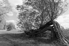 Πορτρέτο δέντρων Στοκ φωτογραφία με δικαίωμα ελεύθερης χρήσης