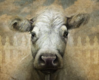 Πορτρέτο αγελάδων στα πολυμέσα ψηφιακά και τον ξυλάνθρακα Στοκ Φωτογραφίες