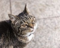 πορτρέτο ανώτερο Υ kuzia ο 12 γατών Στοκ Εικόνες