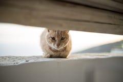 πορτρέτο ανώτερο Υ kuzia ο 12 γατών Στοκ εικόνα με δικαίωμα ελεύθερης χρήσης
